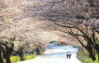 3 tỷ đồng giải thưởng cuộc thi ảnh 'Relive Your Korea Trip'