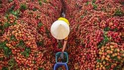 Bắc Giang chủ động tháo gỡ khó khăn, tìm đầu ra cho nông sản giữa 'tâm dịch' Covid-19