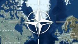 Chuyên gia: Nga sẽ 'xẻ đôi' NATO nếu xảy ra xung đột