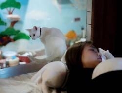 Nhật Bản: Ế ẩm do dịch Covid-19, khách sạn 'hồi sinh' nhờ… mèo
