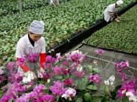 Nông nghiệp Quảng Ninh: Nhiều lợi thế, lắm khó khăn