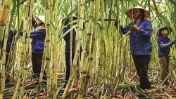 Bộ Công Thương 'mạnh tay' với đường nhập từ Thái Lan