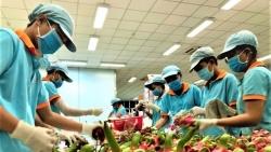 Thanh long Việt Nam 'đắt khách' tại Australia