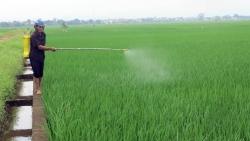 Bộ Công Thương kiến nghị mở 'luồng xanh' đường thủy để tiêu thụ lúa gạo