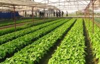 """Doanh nghiệp """"ngại"""" đầu tư vào nông nghiệp vì đất đai manh mún"""
