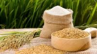 Xuất khẩu ngày 10-12/7: Giá gạo thấp hơn Thái Lan; chi hơn 600 triệu USD mua thịt lợn; Trung Quốc, Ấn Độ thích chè Việt