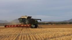 Căng thẳng với Trung Quốc leo thang, xuất khẩu nông sản của Australia thiệt hại gần 2,5 tỷ USD