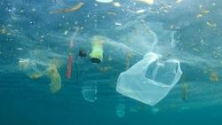 APEC thúc đẩy các mô hình sáng tạo trong giảm thiểu và quản lý rác thải đại dương