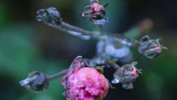 Cỏ cây lung linh như thủy tinh trong băng giá như trong thế giới cổ tích