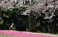 Đại sứ quán Nhật Bản nhận hồ sơ xin visa qua đại lý ủy thác