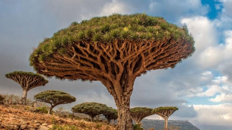 Chiêm ngưỡng vẻ đẹp siêu thực của những loài cây độc đáo trên thế giới