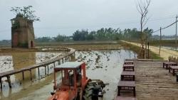Quảng Nam: Độc đáo quán cà phê 'Lò gạch cũ' nằm giữa cánh đồng lúa xanh ngát