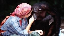 Ngưỡng mộ tình bạn kỳ lạ giữa một phụ nữ và loài tinh tinh