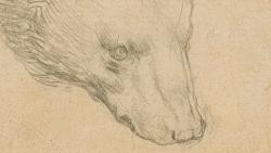 Bức phác họa 'Đầu gấu' của danh họa Leonardo da Vinci được kỳ vọng mức giá không tưởng