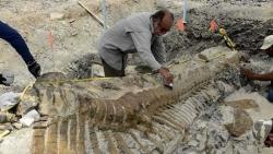 Mexico phát hiện hóa thạch khủng long còn nguyên vẹn từ 73 triệu năm trước