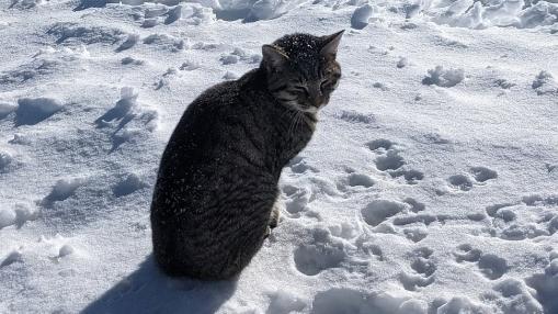 Hành trình kỳ lạ của chú mèo đi lạc, theo chân người lên đỉnh núi Thụy Sỹ cao hơn 3.000 m