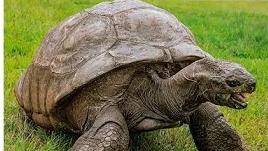 Bất ngờ với cuộc sống sang chảnh của 'cụ rùa' gần 200 tuổi, sống thọ nhất thế giới