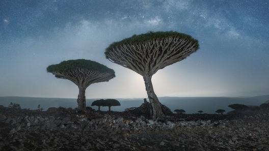 Loài thực vật độc đáo nhất hành tinh: Cây máu rồng kỳ lạ, hàng trăm năm tuổi, rễ mọc ngược
