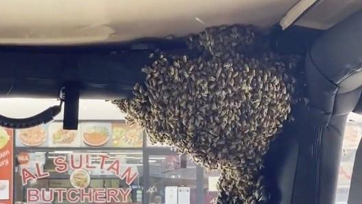 Australia: Chuyện thú vị, đàn ong 'thích' ô tô, chuyển nhà chỉ trong 10 phút