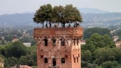 Độc đáo tòa tháp cổ 700 năm tuổi với 7 cây sồi mọc trên đỉnh