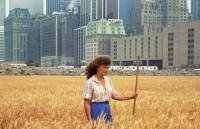 New York: Bất ngờ về cánh đồng lúa ngay giữa thành phố