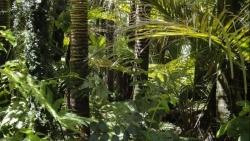 Nhà khoa học cảnh báo nguy cơ từ nạn phá rừng Amazon
