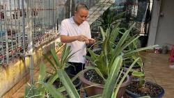Đinh Quyền: Ông chủ vườn lan đam mê loài hoa vương giả