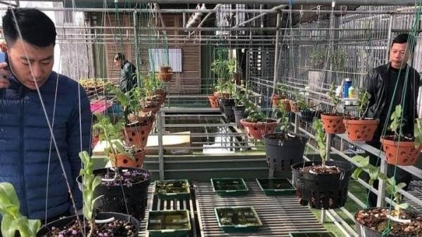 Nghệ nhân Nguyễn Đức Đại: Đam mê hoa lan là cách để thư giãn mỗi ngày