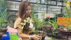 Nghệ nhân Tám Châu chia sẻ bí quyết trồng lan