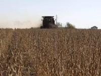 10% thị trường nông phẩm thế giới sẽ về tay Brazil
