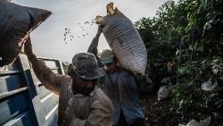 Giá cà phê hôm nay 16/4: Dừng tăng mạnh, tạm điều chỉnh; cà phê robusta có thể sớm vượt ngưỡng 1.380 USD