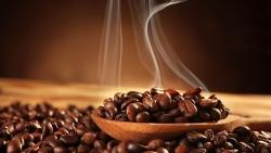 Giá cà phê hôm nay 18/9: Cao nhất trong 12 tháng qua, nguồn cung toàn cầu sẽ trở lại trong niên vụ 2022-2023