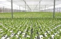 Nhiều tập đoàn lớn đầu tư hàng tỷ USD vào nông nghiệp công nghệ cao