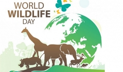 Hỏi đáp về Ngày Quốc tế: Có bao nhiêu loài động vật hoang dã trên Trái đất?