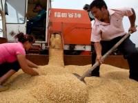 Mỹ kiện Trung Quốc vì trợ giá nông sản