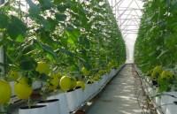 Doanh nghiệp đầu tư vào nông nghiệp sẽ được ưu tiên tối đa về vốn